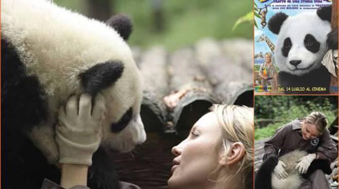 Approda in Italia Sneezing Baby Panda