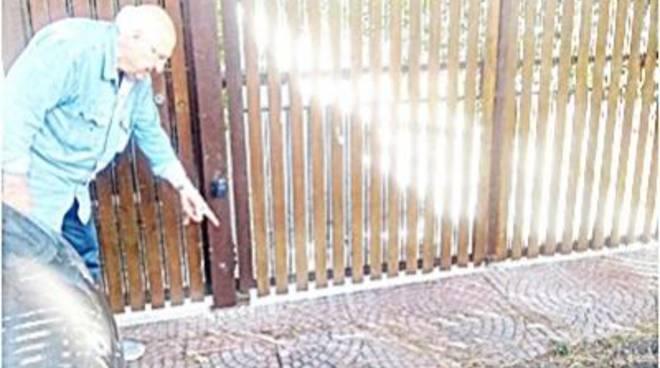 Le radici in strada fanno cadere una 87enne, ed è polemica