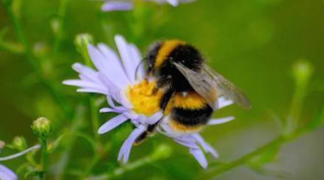 Allarme pesticidi: api in estinzione