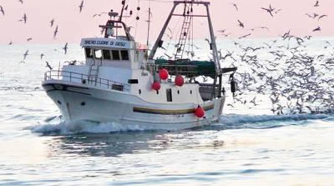 """Califano: """"Ok al bando per sostenere la pesca"""""""