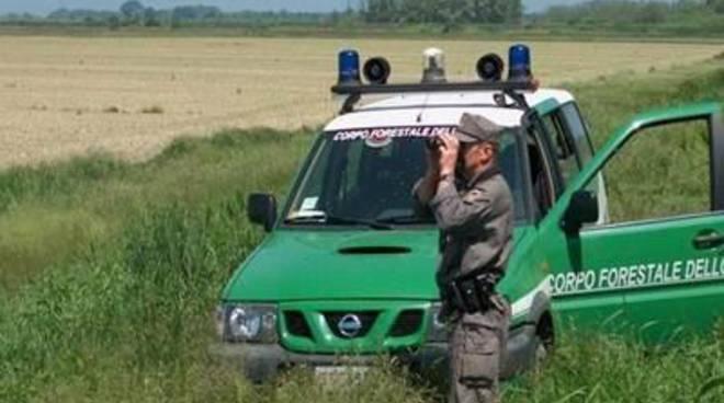 """Fare Verde: Contrari allo scioglimento del Corpo Forestale dello Stato"""""""