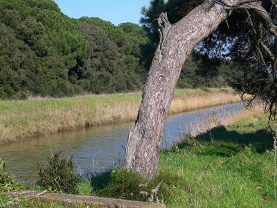 Fiumicino, 15.900 ettari protetti per l'Oasi Wwf di Macchiagrande