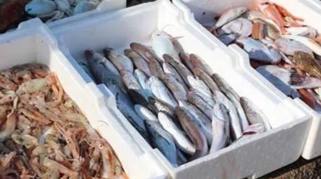 Sequestrati oltre 46 Kg di pesce dalla Guardia Costiera