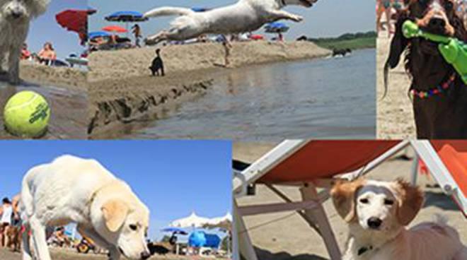 Spiaggia riservata ai cani al Lido