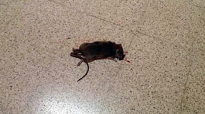 topo morto scuola san giorgio