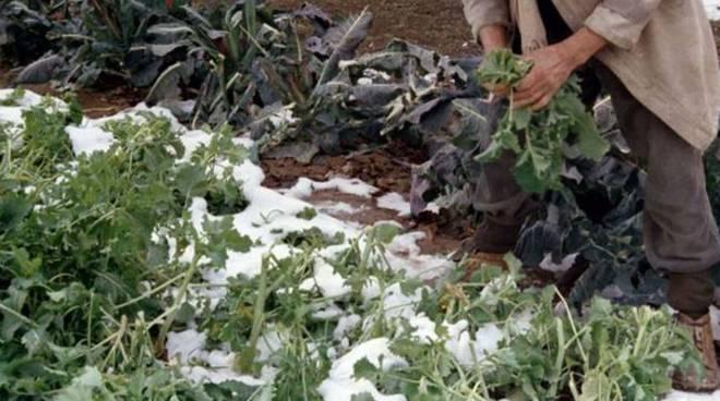 gelo agricoltura