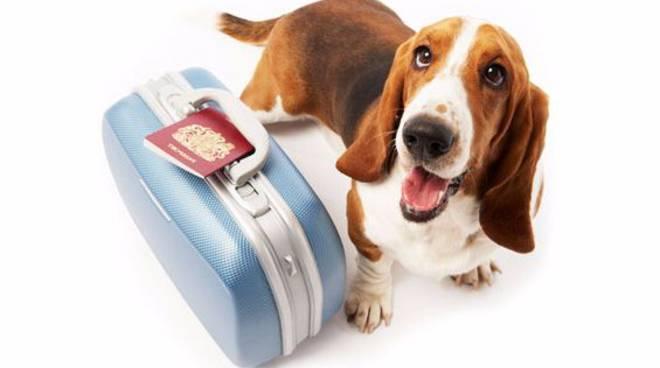 In viaggio con l'amico a quattro zampe, ottenendo il passaporto europeo per animali domestici