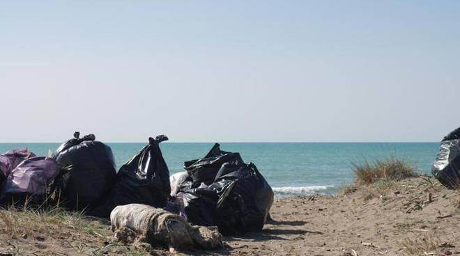 rifiuti spiagge fiumicino