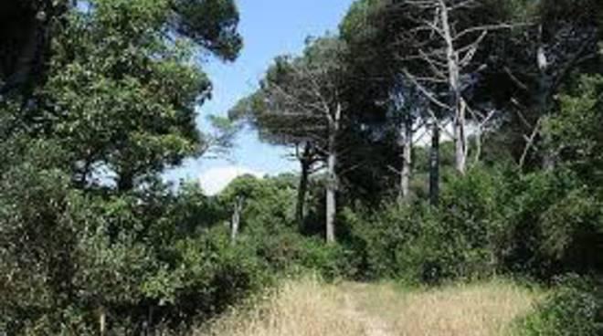 bosco arrone maccarese