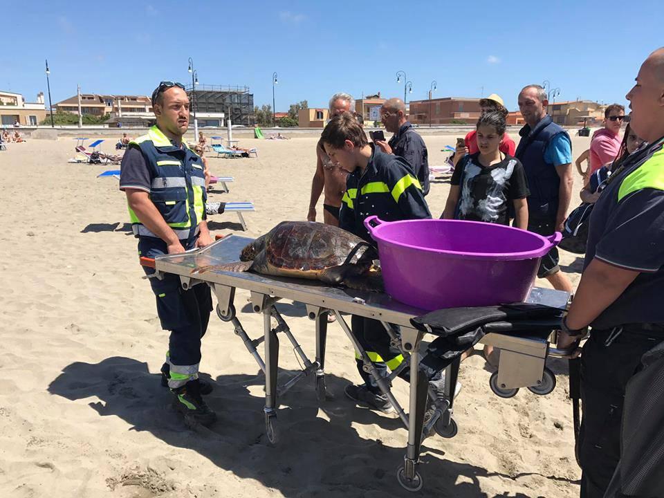tartaruga soccorsa dal soccorso veterinario