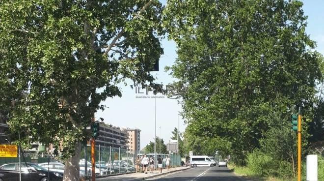 albero via portuense