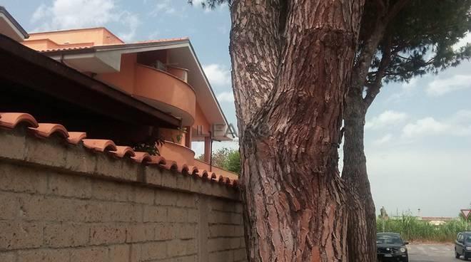 pini alberi tagliati via Monte Corno