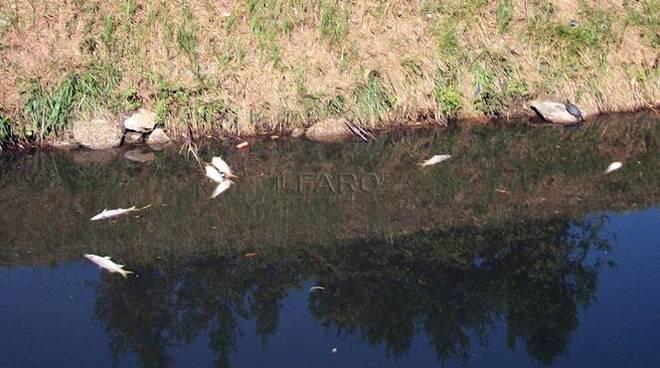 MORIA DI PESCI fiumicino settembre 2017