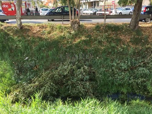 canale ostiense, atti vandalici
