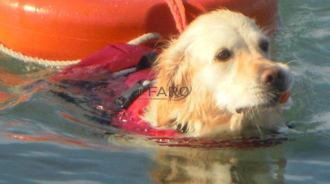 Cani di salvataggio, salvamento, Focene, Lunga vita al lupo