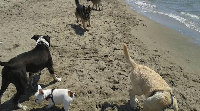 spiaggia per cani ostia
