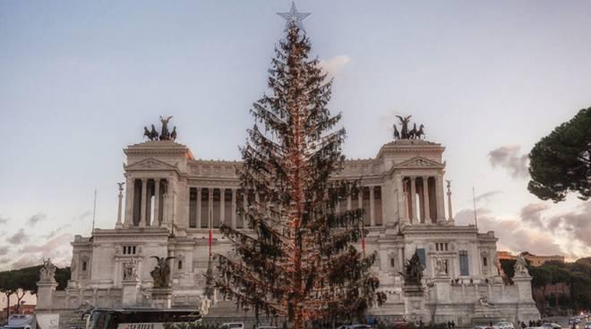 Albero Di Natale Roma.Countdown Per L Albero Di Natale A Roma Raggi Spelacchio