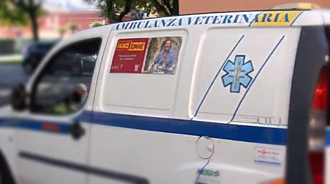pet in time, ambulanza veterinaria