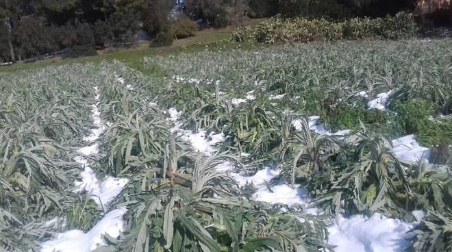 Emergenza gelo neve su campi agricoli