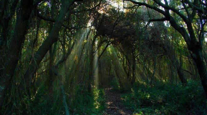 oasi macchiagrande fregene