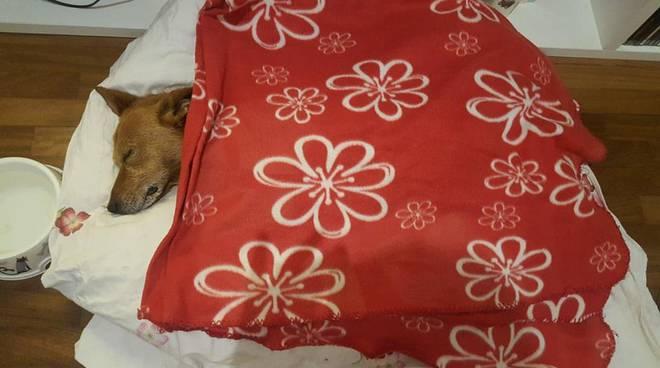 Lucky, il cane legato, picchiato e gettato in un cassonetto a Latina