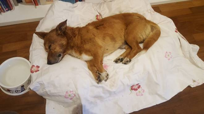 Latina, Lucky il cane pestato e abbandonato in un cassonetto