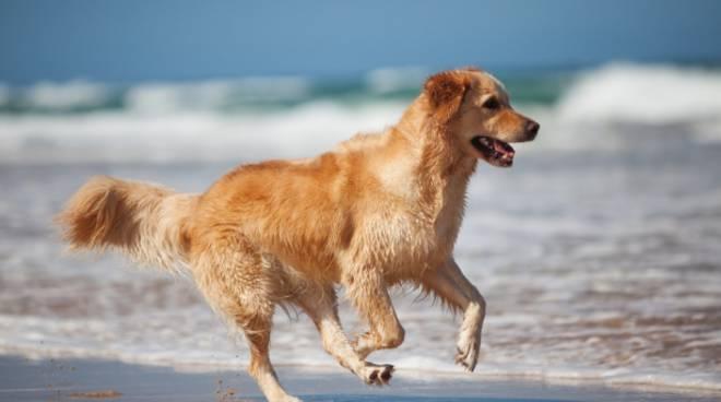 Minturno, ai cani vietato l'accesso alle spiagge