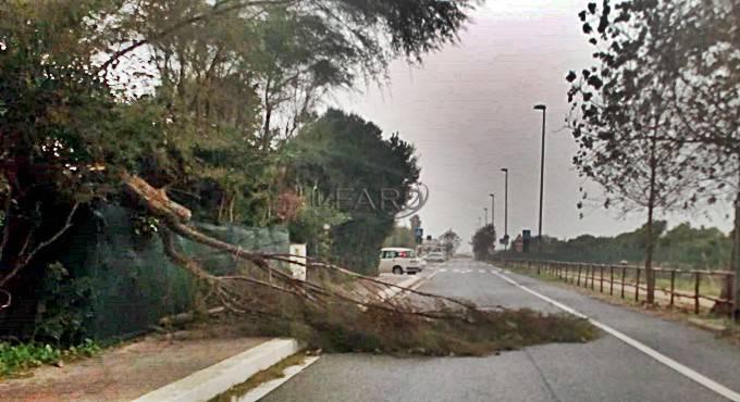 alberi abbattuti fregene