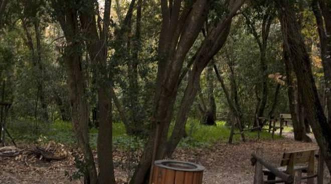 bosco di palo, sentinelle del bosco