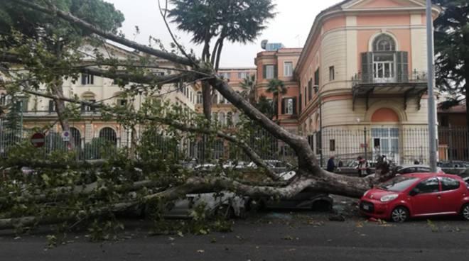 Maltempo a Roma, il vento fa strage di alberi