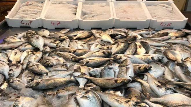 Maltempo a Gaeta, rotte almeno 15 gabbie degli allevamenti ittici