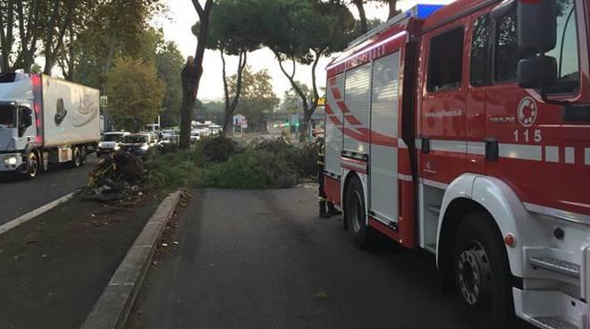 vigili del fuoco alberi caduti maltempo