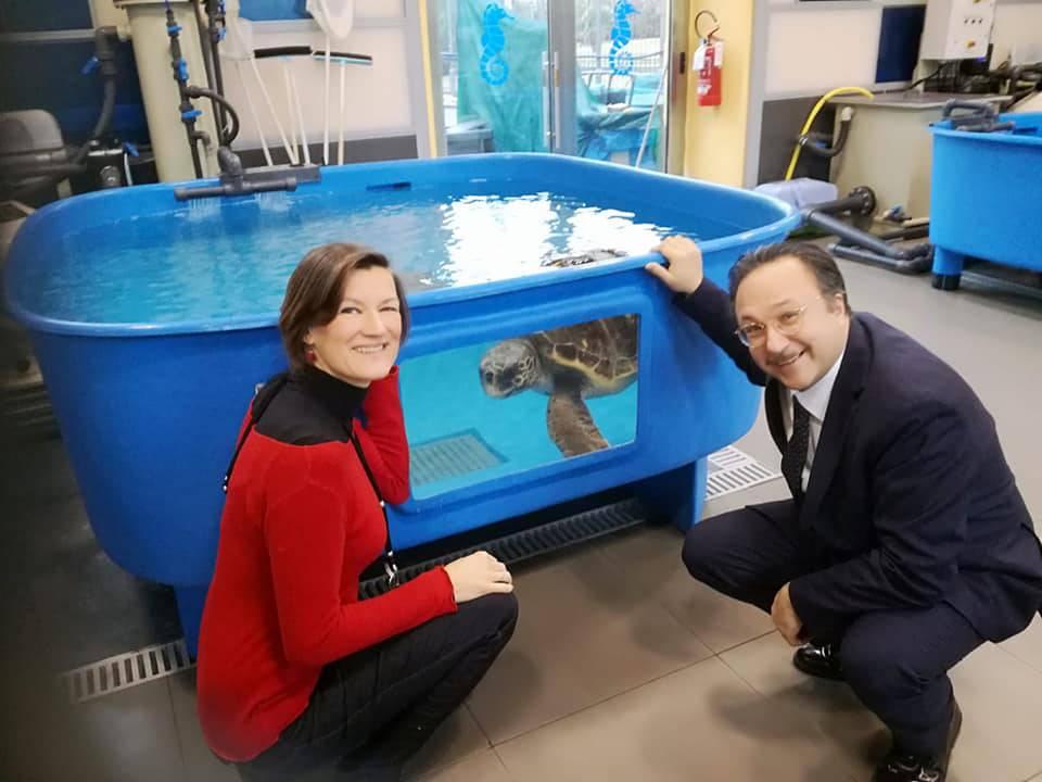 Tartarughe marine, Ventotene candidata come sede permanente per l'osservazione e primo soccorso