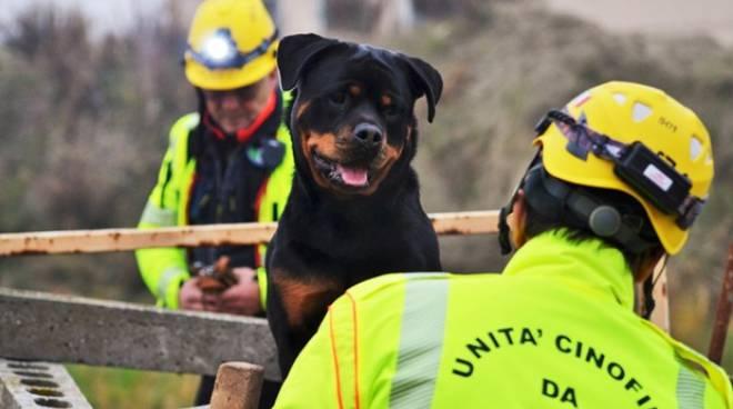 cani soccorso