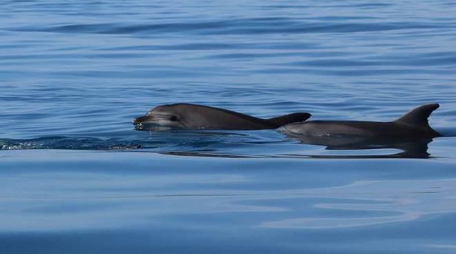 delfini fiumicino