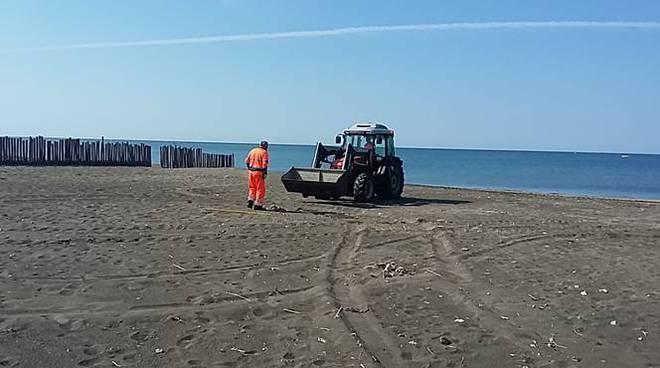 pulizia spiaggia campo di mare cerveteri