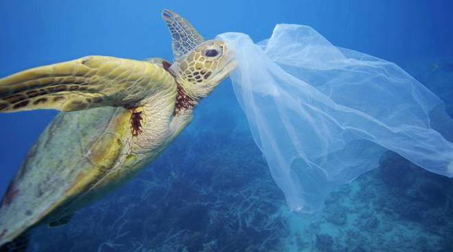 tartauga plastica salva mare