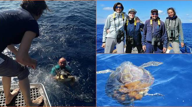 tartarughe marine ventotene