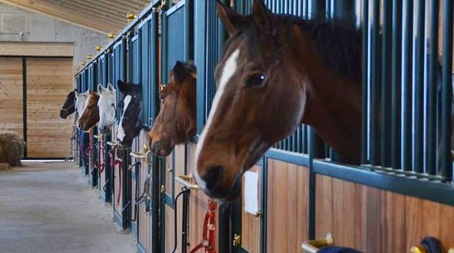 cavalli maneggio