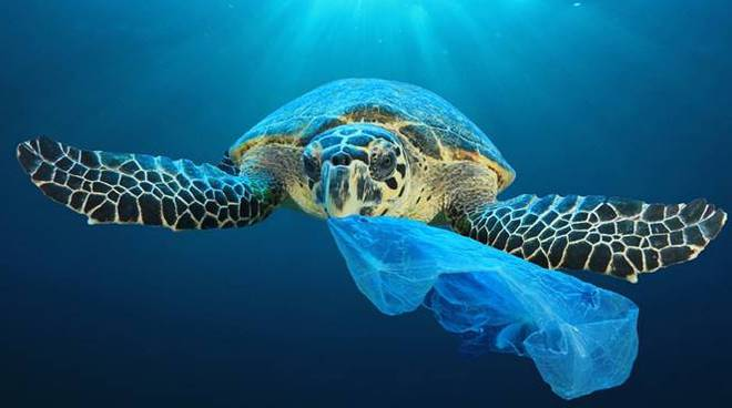 rifiuti mare tartaruga marine litter