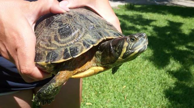 tartarughe cerveteri