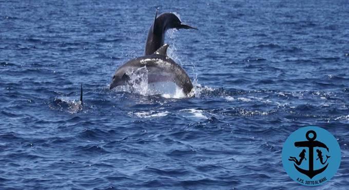 delfini nel mare di Ostia