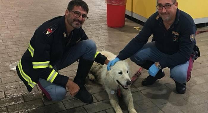 cane polizia gra