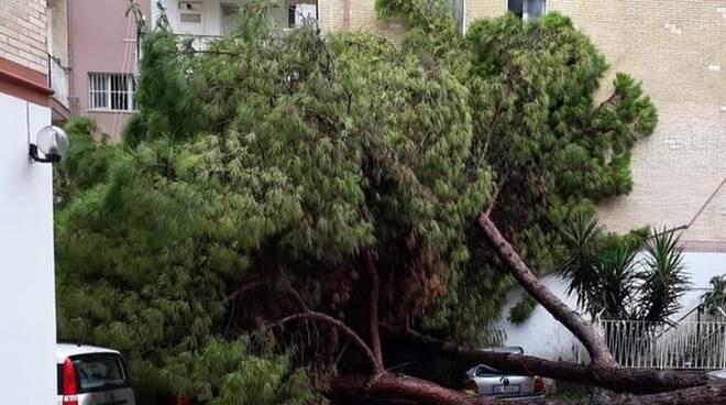 Allarme caduta alberi a Gaeta, chiuso al traffico parte del Lungomare Caboto