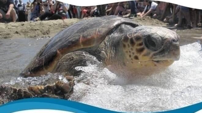 Da Ventotene il lieto fine per Aprea: la tartaruga sta per tornare in mare