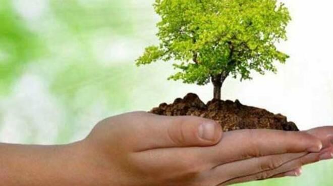 """""""Piantiamo un albero"""", la Cisl di Latina riparte dal verde per riqualificare il quartiere di Campo Boario"""