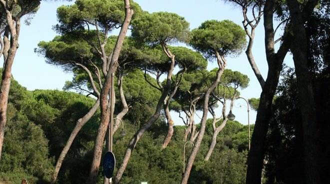 riserva naturale statale litorale romano