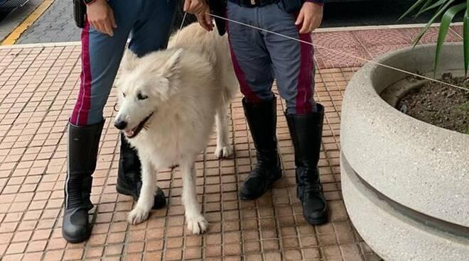 soccorso cane