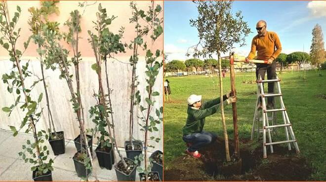 alberi piantati