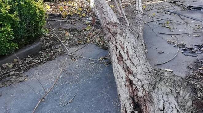 albero caduto villaggio azzurro